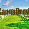 Top Cannabis Stocks to Watch in June & the rest of 2015